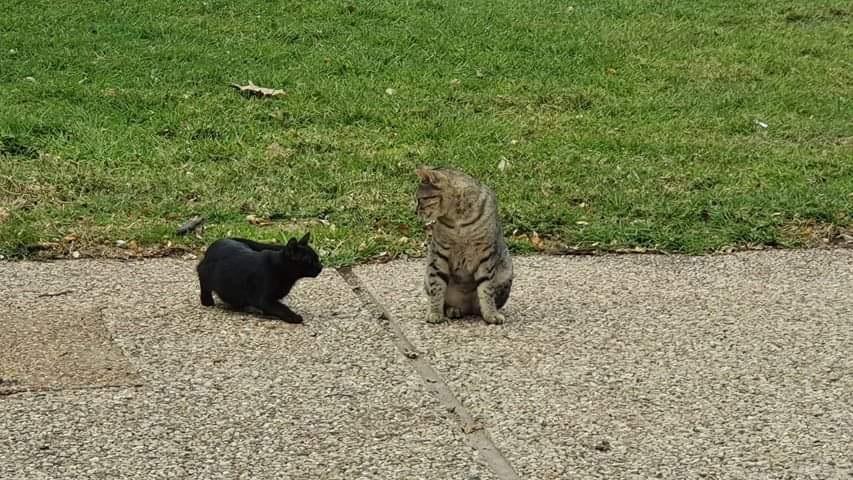 """חתולי רחוב ביזרעאל. """"בקיבוץ התעלמו לגמרי מהפנייה שלנו"""""""