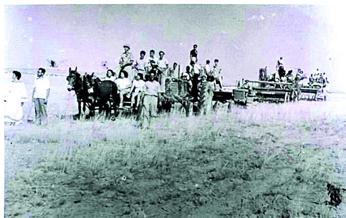חגיגות שבועות בקיבוץ צאלים בראשית שנות ה־ 50