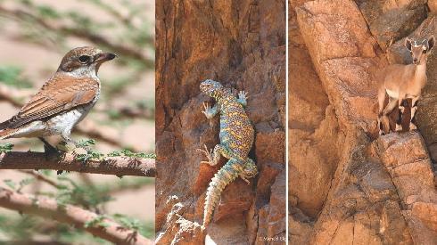 צבי, חרדון וציפור בפארק תמנע