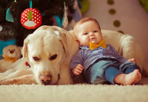 שימו לב שההתרגשות וההתלהבות לא תהפוך לגורם שילחיץ את הכלב