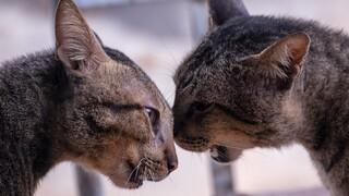 מה למדנו ממלחמת החתולים במרפסת?