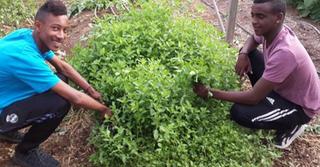 נותנים תקווה. פעילות בחוות הנוער, צילום: באדיבות החווה