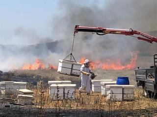 מקווים שהממשלה תעמוד בהבטחות. כוורות עולות באש בעוטף, צילום: דבוראי אלון סגרון מכוורת ארז