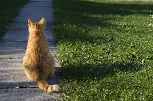 עדיין איננו יודעים אם החתול הוא זכר או נקבה. צילום המחשה: שאטרסטוק